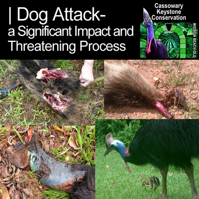 Dog Attack- a Significant Impact and Threatening Process