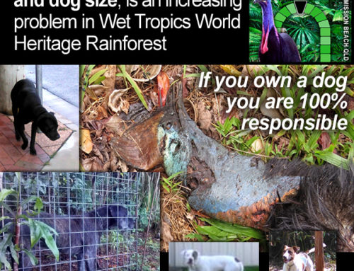 Roaming uncontrolled dogs and dog size, is an increasing problem in Wet Tropics World Heritage Rainforest