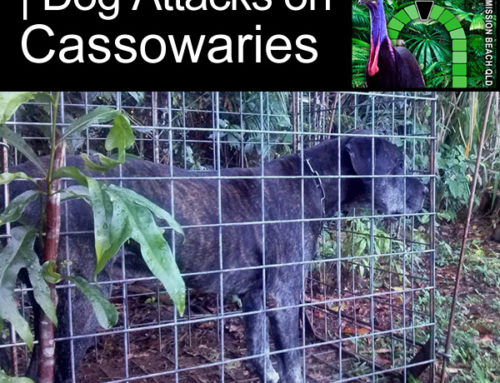 Dog Attacks on Cassowaries