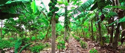 regenerative agriculture inspirations